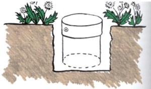 Pail with bottom removed used as a barrier to prevent suckers from spreading.