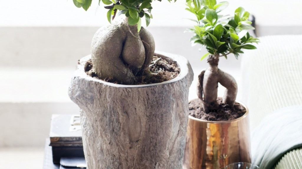 Two ginseng figs on a table