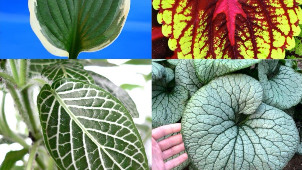 Four different variegated plants.