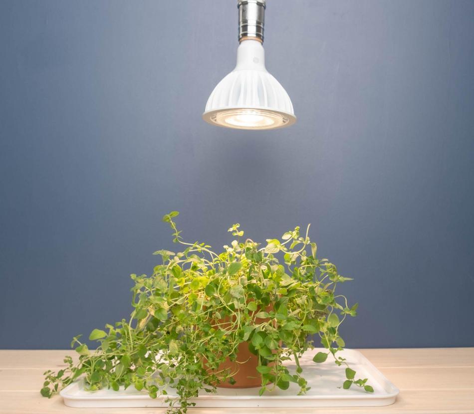 GE 32W grow light LED bulb
