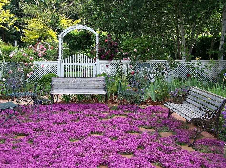 Red creeping thyme lawn
