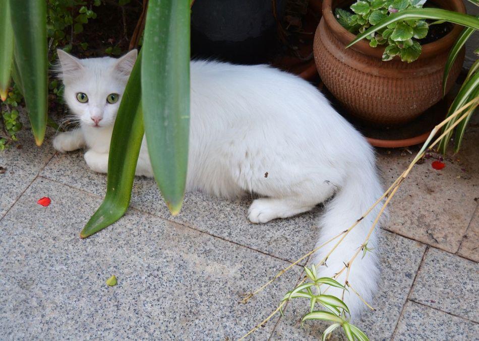 White cat hiding among plants.