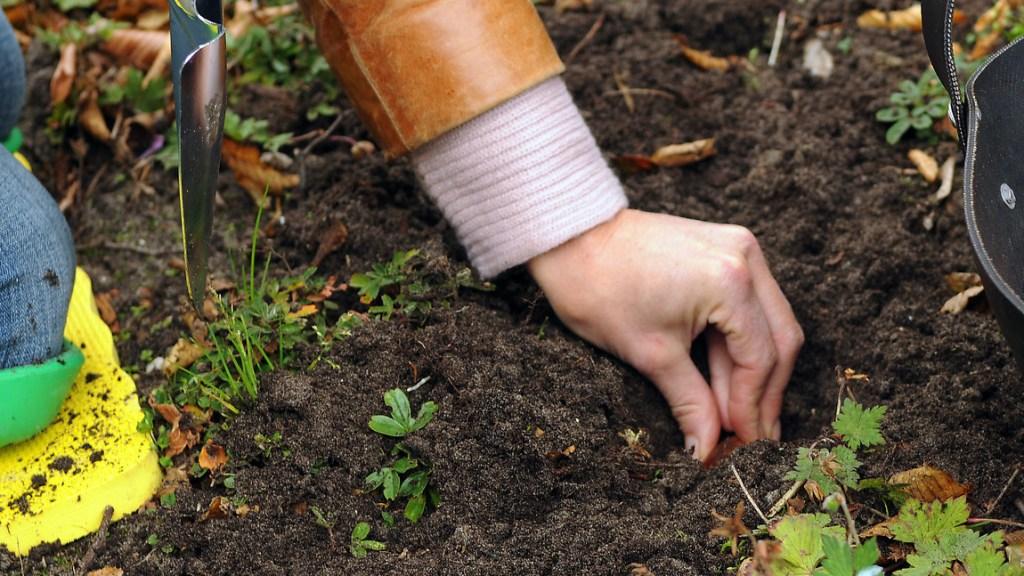 Hand planting bulb.