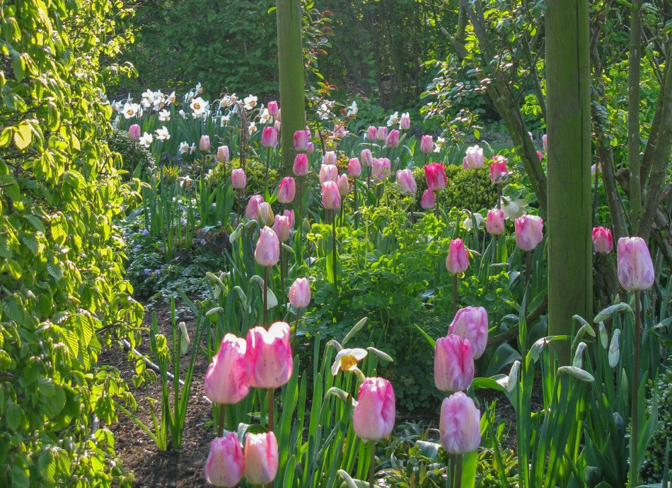 Garden with tulips and narcissus