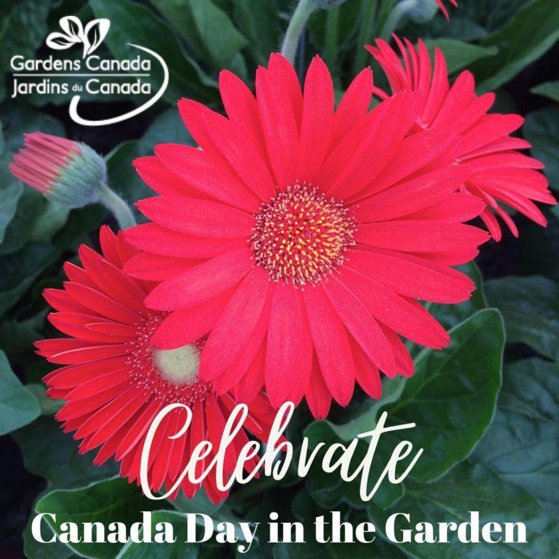 Canada Day 2020 In The Garden Laidback Gardener