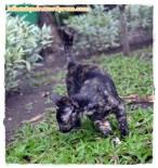 09. Kucing