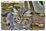 45. Kucing