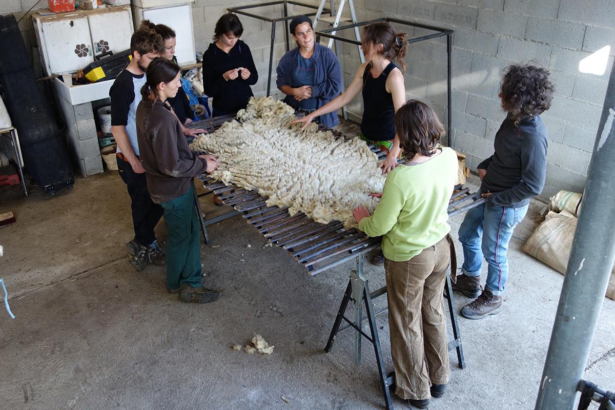 Laines Paysannes Formation sur les types de laine 1