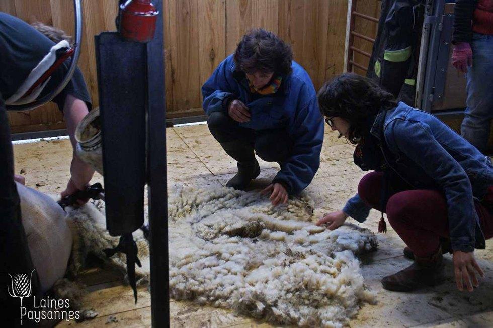 Laines Paysannes Formation sur les types de laine 3
