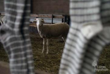 Laines Paysannes chaussettes en laines locales