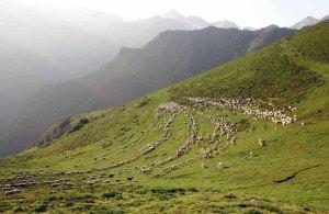 Laines Paysannes estive en Ariège