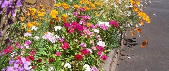 2 fleurs devant la maison juin 2014