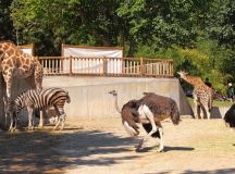 Zoos and Aquariums | LAJewishGuide.com – Your #1 Guide to ...