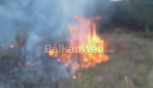 Zjarr i qëllimshëm në kodrat e fshatit Mbolan në Berat