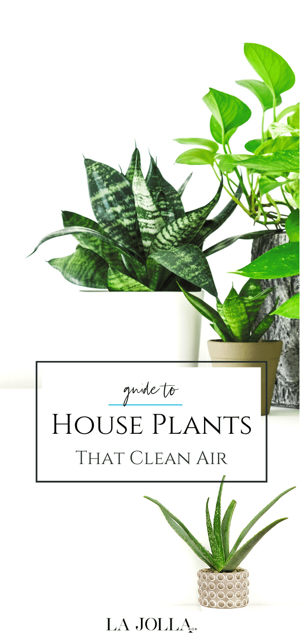 Find out which indoor plants clean air.