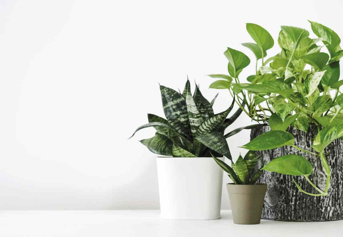 which indoor plants clean air scaled - HEALTH AND FITNESS