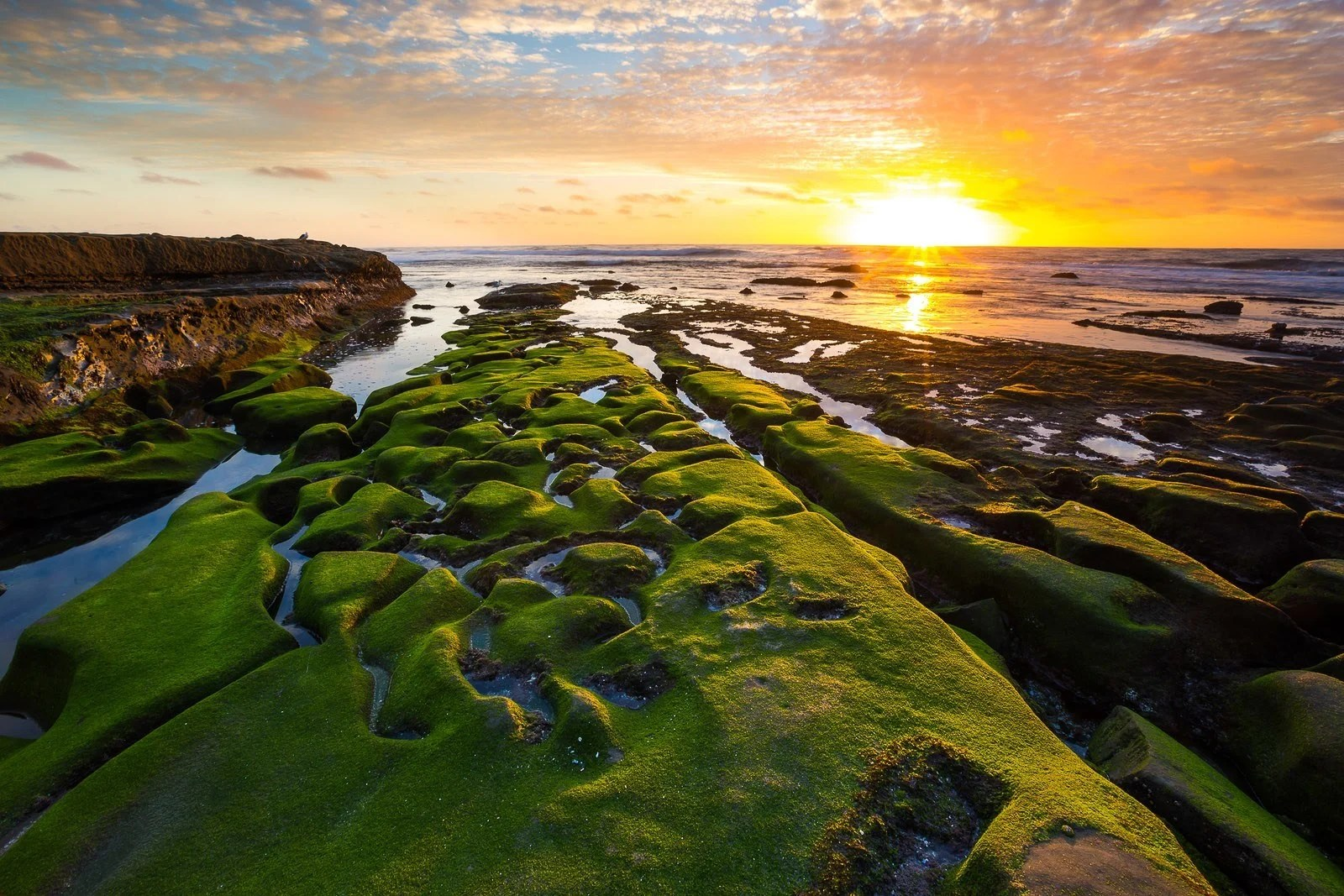 19 FREE Things To Do In La Jolla San Diego Attractions