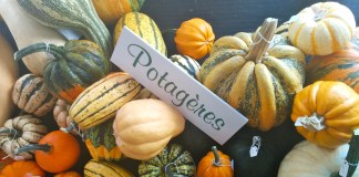 blog-courges-homa