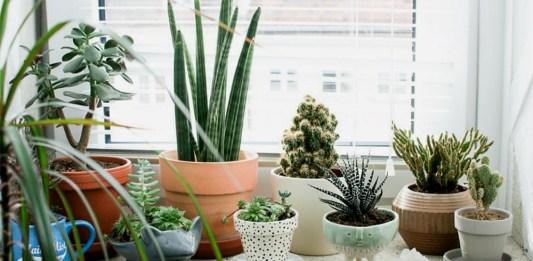 plante cover