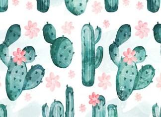 cactus cover