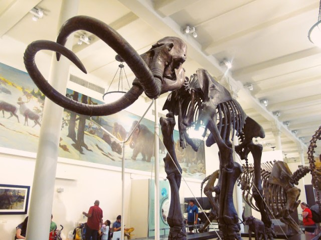 Le Muséum d'Histoire Naturelle, New York