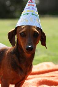 dog_birthday_party7