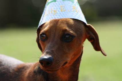 dog_birthday_party8