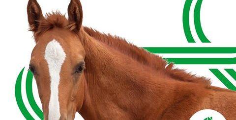 grab-horse