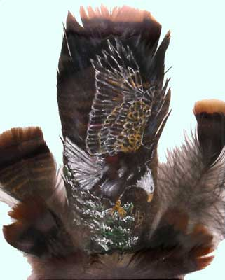 eagle on feathers