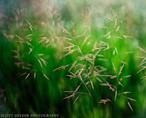 Grasslands Abstract Scott Snyder Photography