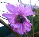 Muster Field Flower