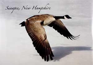 Wild Goose Sunapee card