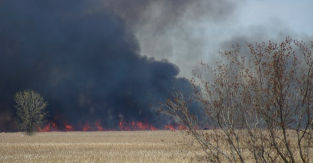 Wetland set on fire to improve the plant community