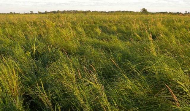 Southern Sedge Meadow