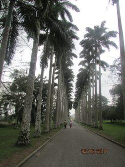 Aburi Botanical Gardens Ghana Feb 2017 Lake Arbor Travel-17