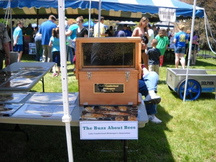 The LCBA observation hive, complete with a frame of bees on display