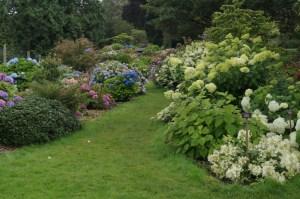 The hydrangea garden