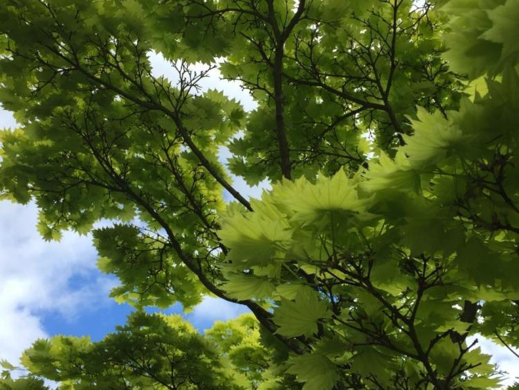 Troutbeck Garden Trail 2015
