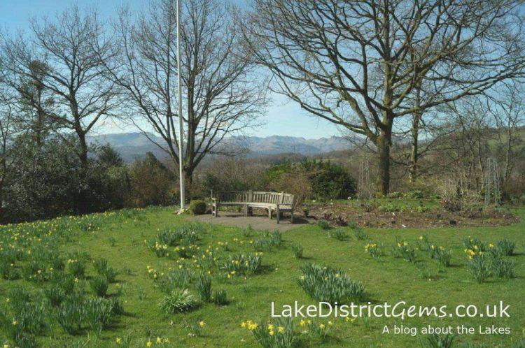 Daffodils at Holehird