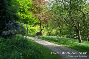 Woodland walk at Holker Hall