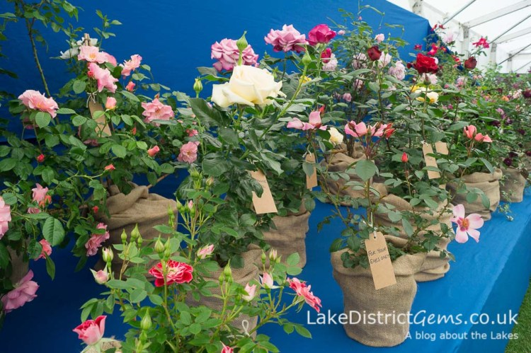 In the Horticultural Marquee at the Holker Garden Festival 2016