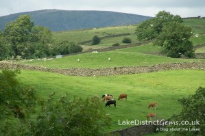 Scenergy from the Lake District Sheepdog Trials, Ings