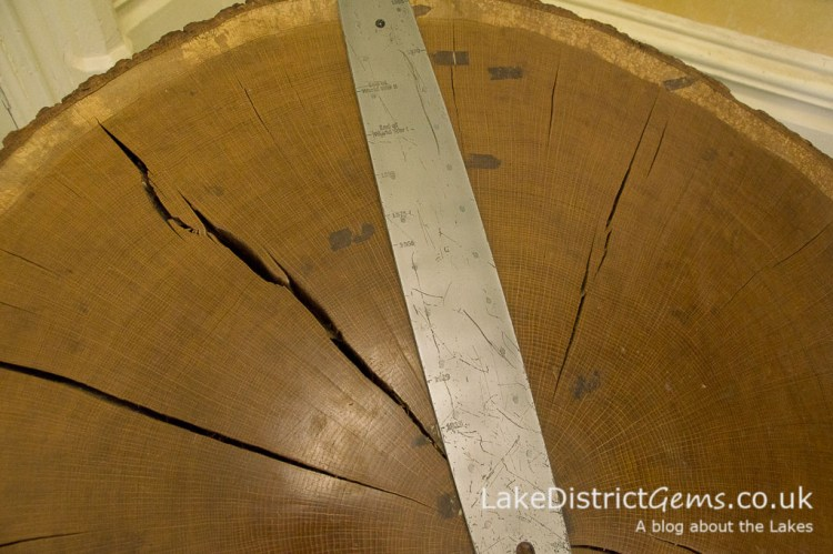 A tree ring with key dates marked on a chainsaw bar
