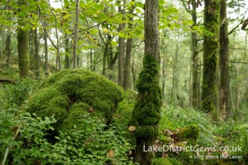 On the woodland walk from Finsthwaite to High Dam