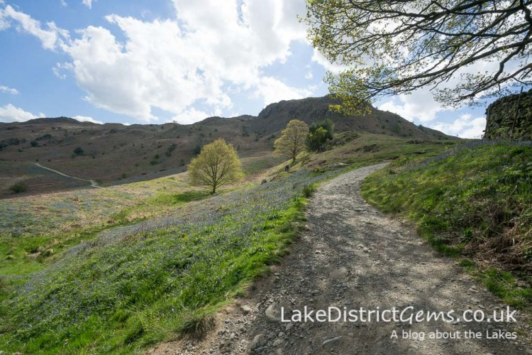 The steeper path to Loughrigg Terrace