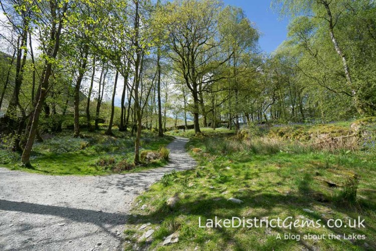 The woodland walk to Loughrigg Terrace