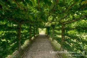 One of the pleached lime tunnels at Levens Hall