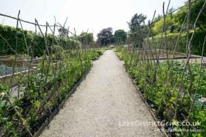 The veg garden at Sizergh Castle