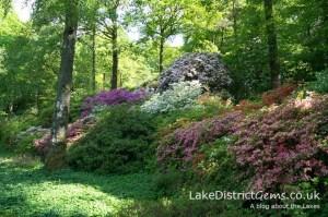 The azaleas at the Stagshaw Garden outside Ambleside