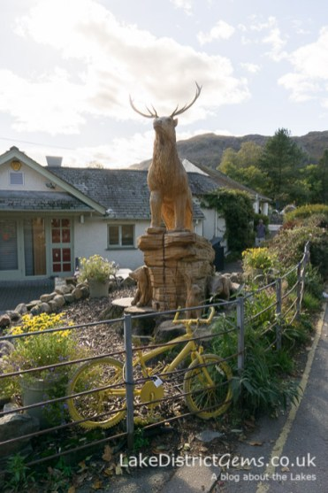Stag outside Grasmere Garden Village